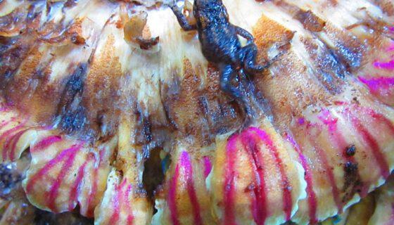 Pilze No 4 (Aquarell Auf Pilz )