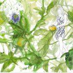 Passionsblüte Gomera, Aquarell 2018, 40 x 100 cm