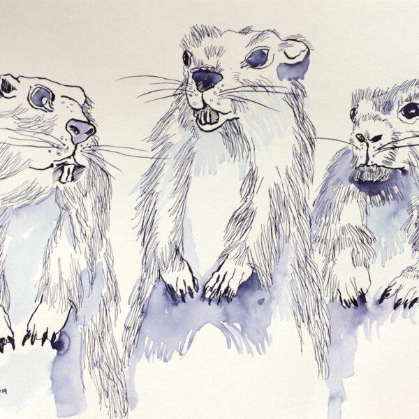Drei sind einer zuviel - die Erdhörnchen,