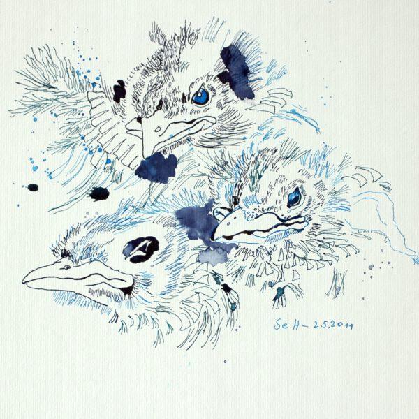 Drei Amseln im Nest